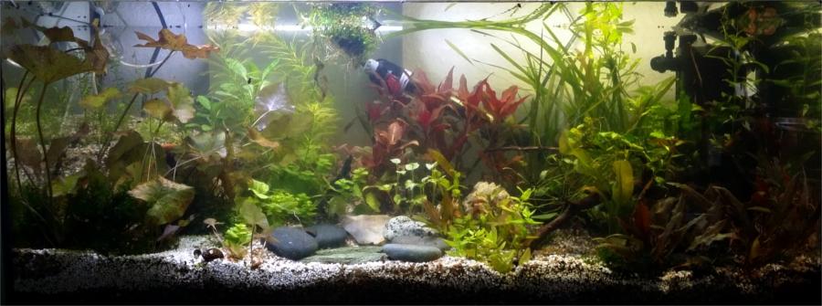 Low budget aquascaping aquascaping einsteiger for Aquarium einsteiger